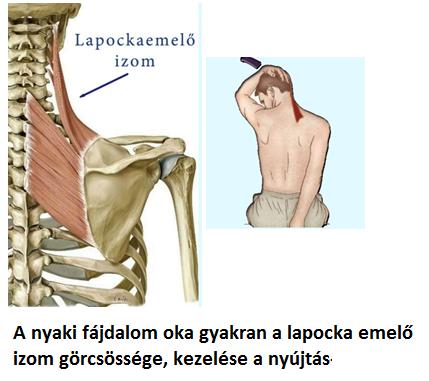 fájdalom a nyaki és ízületi izmokban)